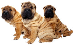 Puppy Clone